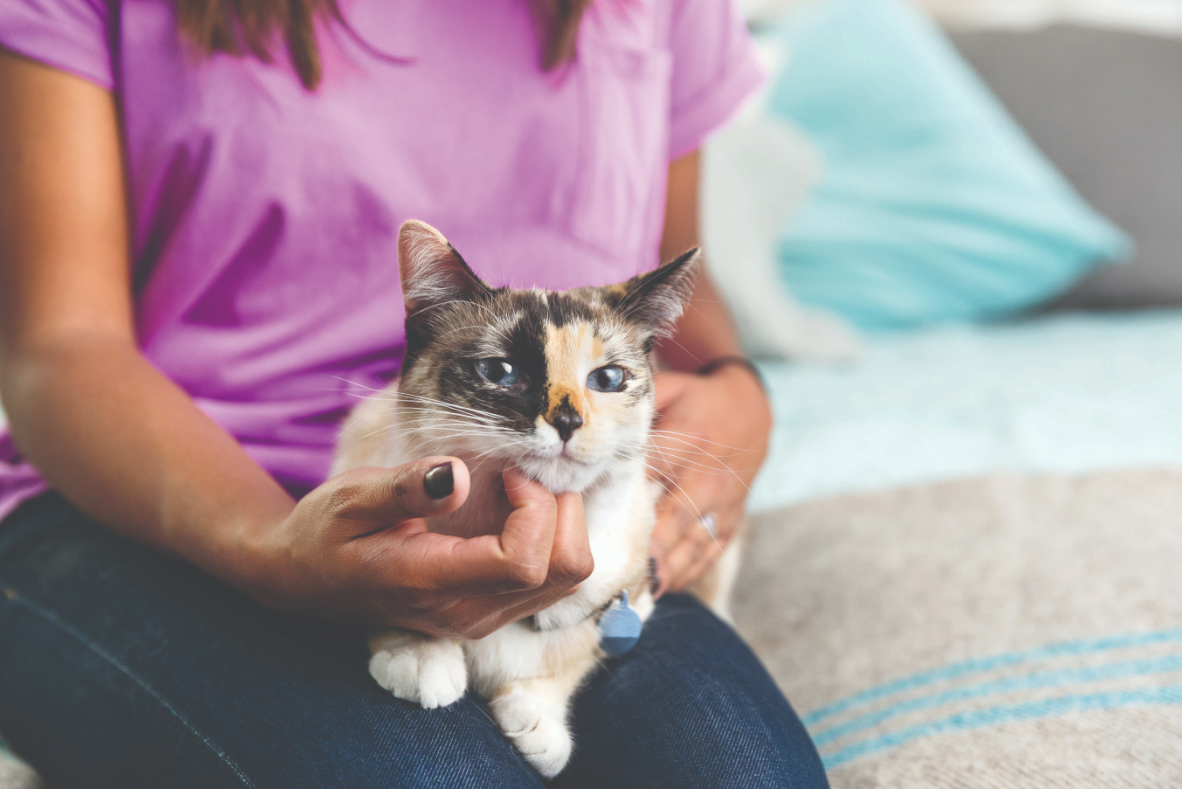Cat Food Advisor Revealed How to Choose the Best Cat Food