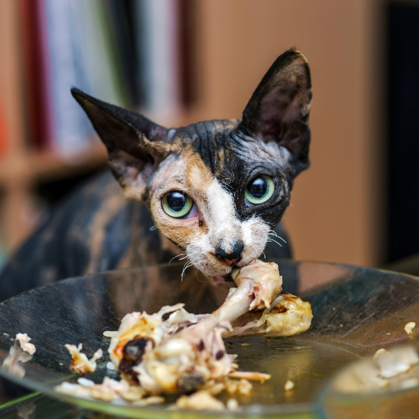 Cat Food Advisor Told That 10 Human Food Could Kill Your Cat