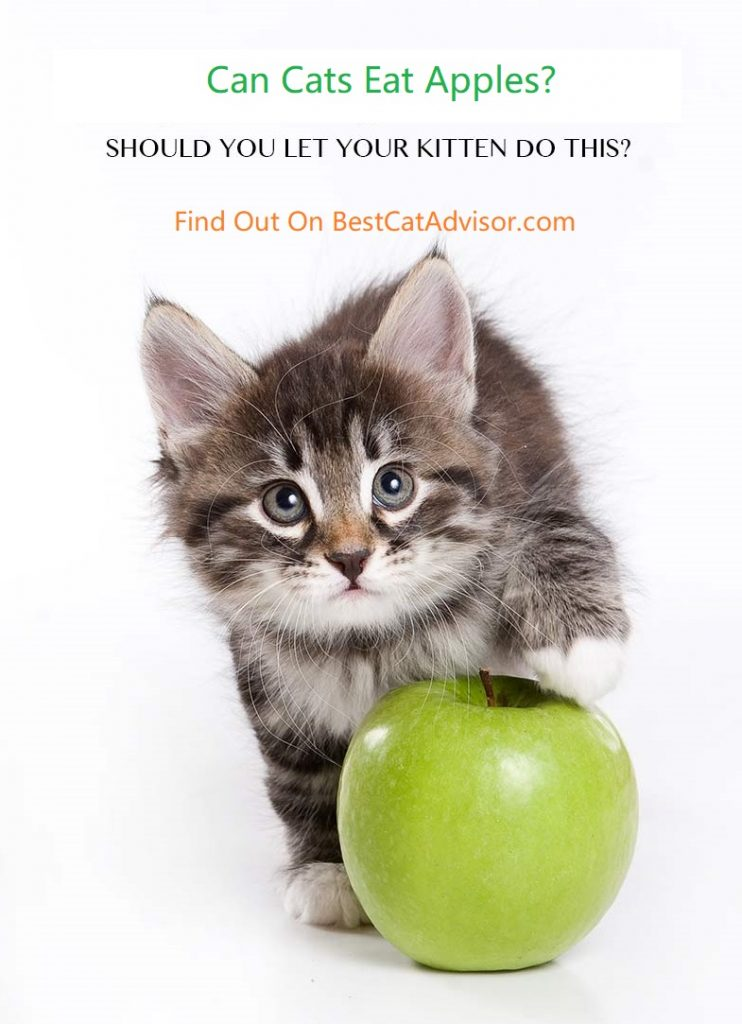 can cats eat apples are apples safe for cats cat food advisor. Black Bedroom Furniture Sets. Home Design Ideas
