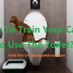 How To Train Your Cat To Use The Toilet?